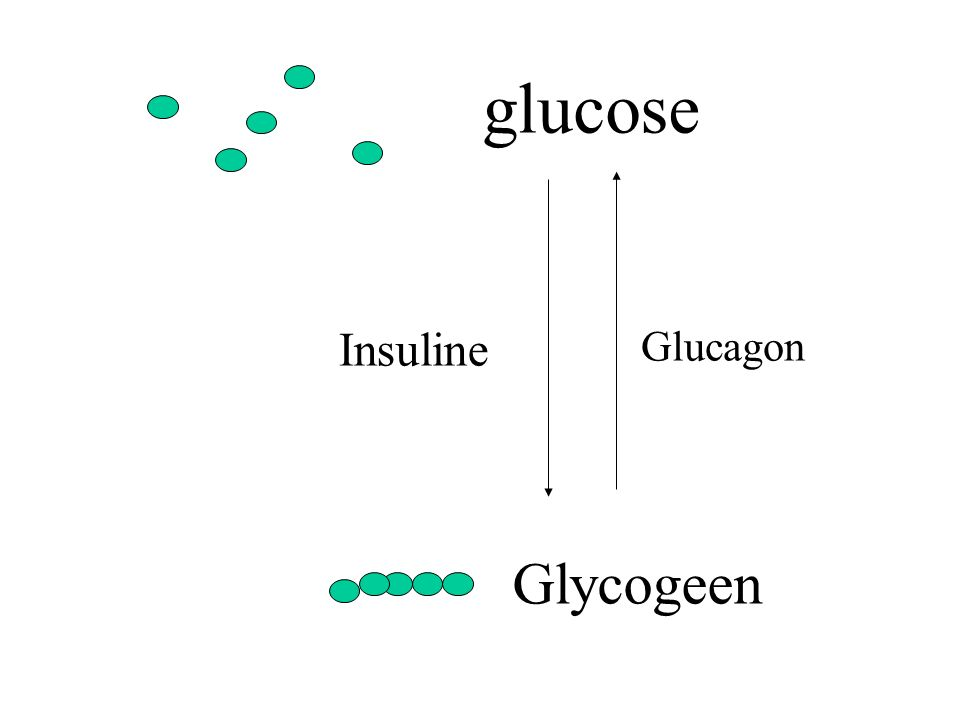 glucose Insuline Glucagon Glycogeen