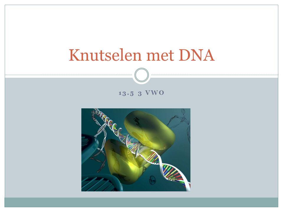 Knutselen met DNA 13.5 3 VWO