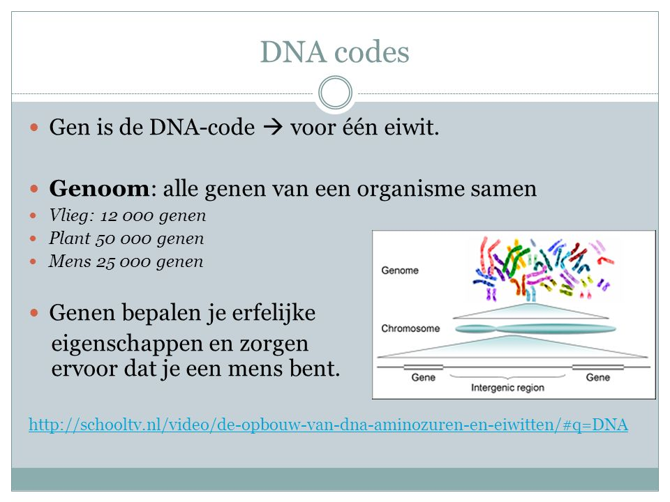 DNA codes Gen is de DNA-code  voor één eiwit.