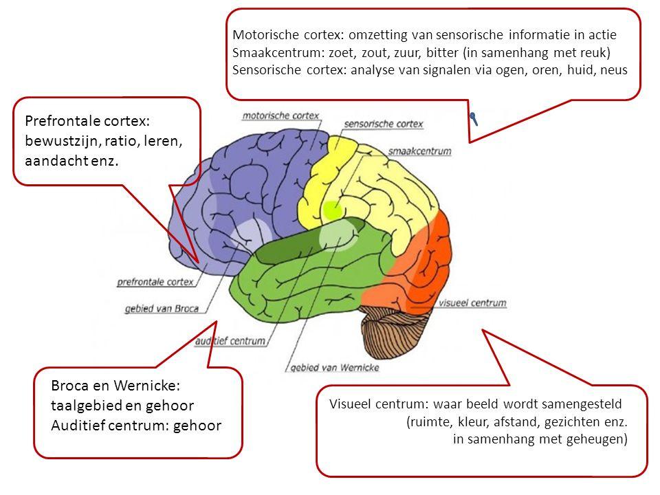 bewustzijn, ratio, leren, aandacht enz.