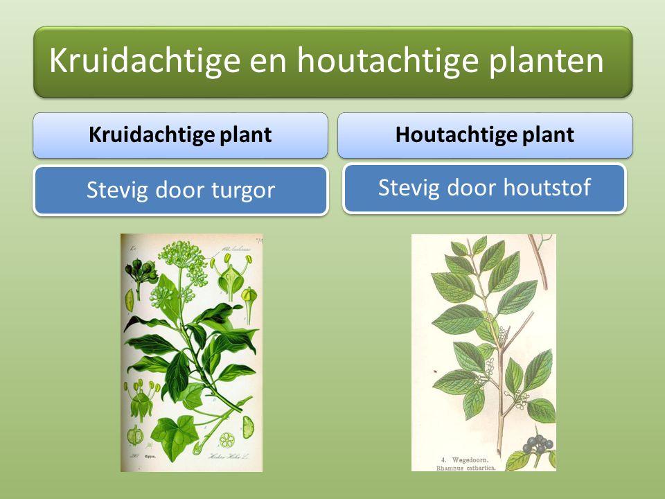 Kruidachtige en houtachtige planten