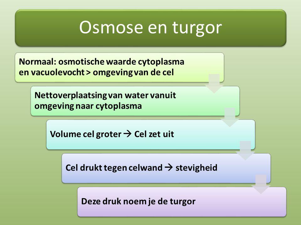 Osmose en turgor Normaal: osmotische waarde cytoplasma en vacuolevocht > omgeving van de cel.