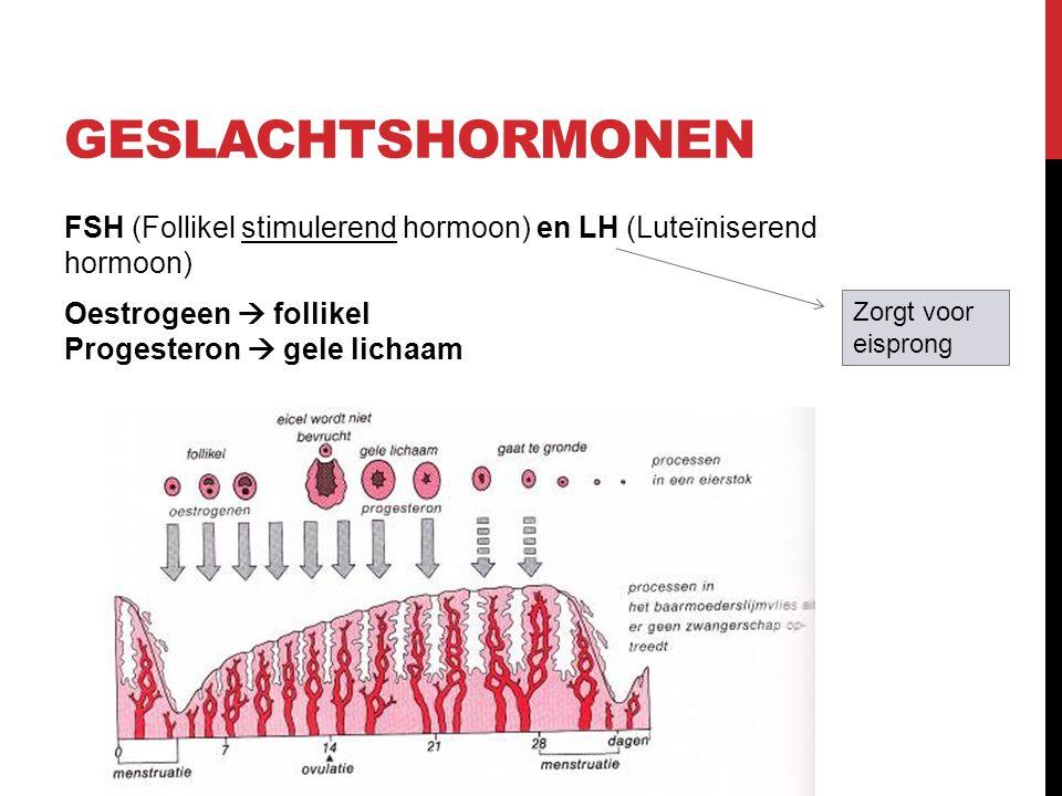 Geslachtshormonen FSH (Follikel stimulerend hormoon) en LH (Luteïniserend hormoon) Oestrogeen  follikel Progesteron  gele lichaam