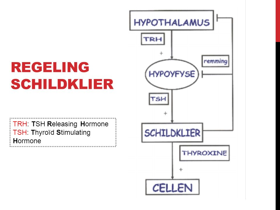Regeling schildklier TRH: TSH Releasing Hormone