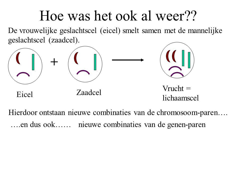 Hoe was het ook al weer De vrouwelijke geslachtscel (eicel) smelt samen met de mannelijke geslachtscel (zaadcel).