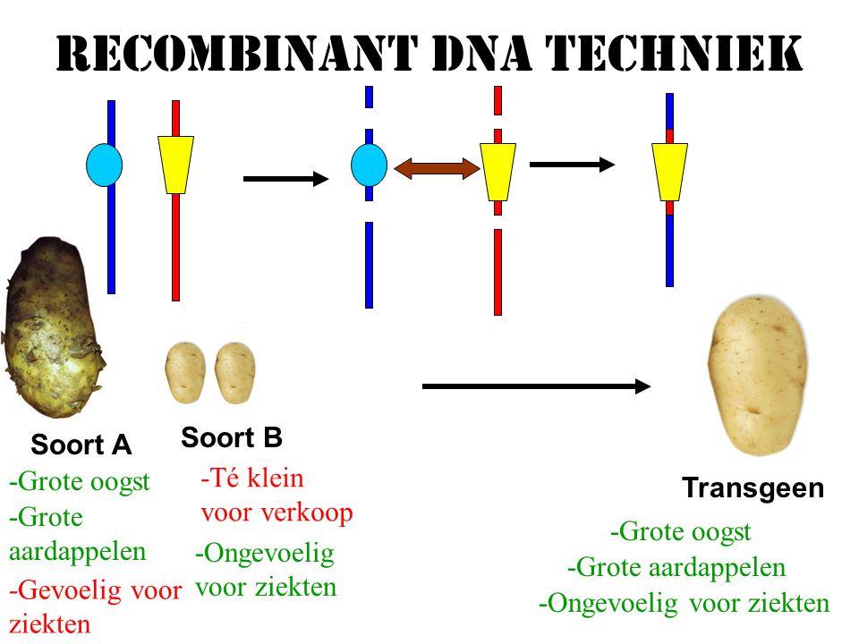 Recombinant DNA techniek