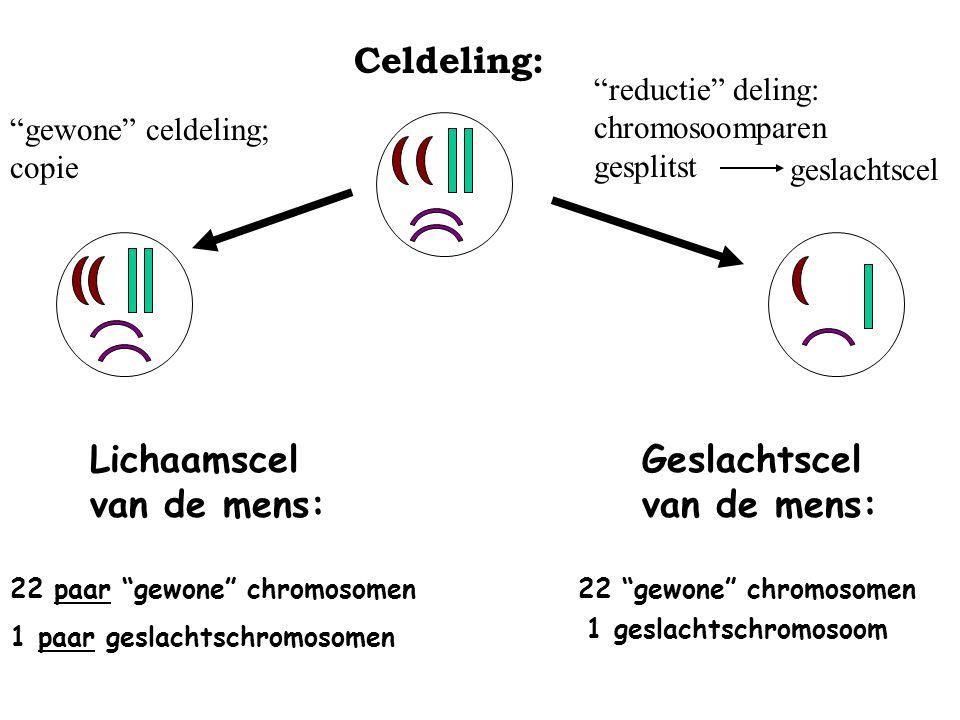 Lichaamscel van de mens: Geslachtscel van de mens: