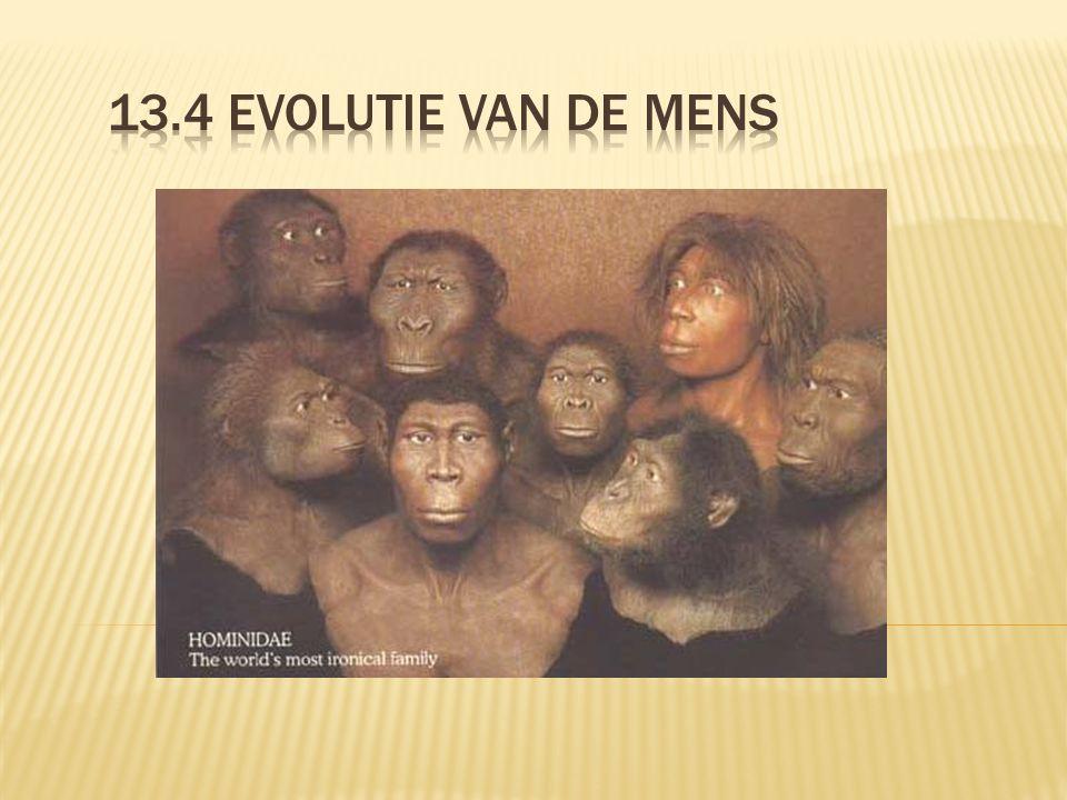 13.4 Evolutie van de mens