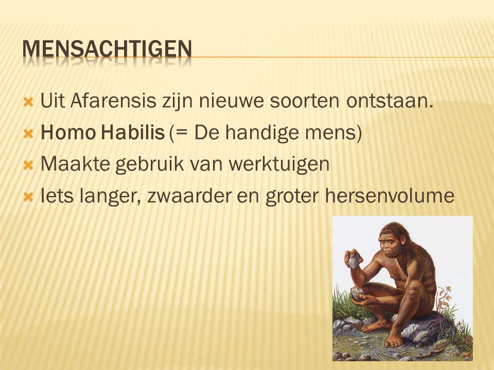 Mensachtigen Uit Afarensis zijn nieuwe soorten ontstaan.