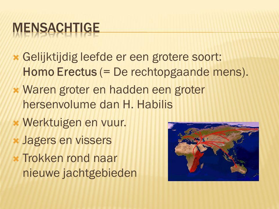 Mensachtige Gelijktijdig leefde er een grotere soort: Homo Erectus (= De rechtopgaande mens).