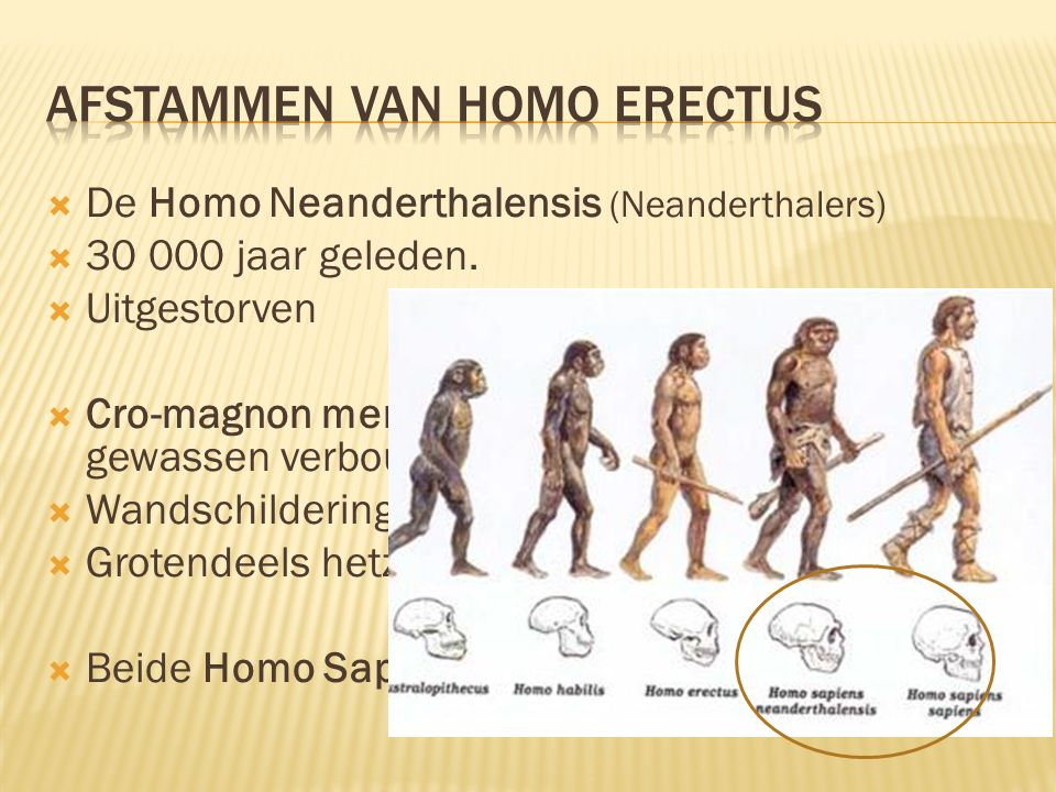 Afstammen van Homo Erectus