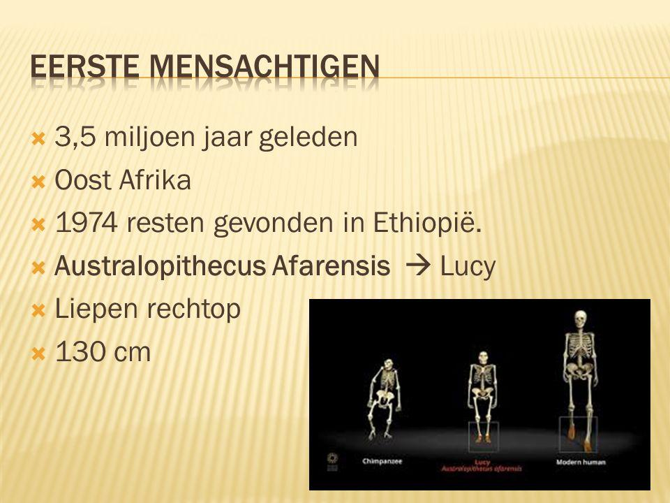 Eerste Mensachtigen 3,5 miljoen jaar geleden Oost Afrika