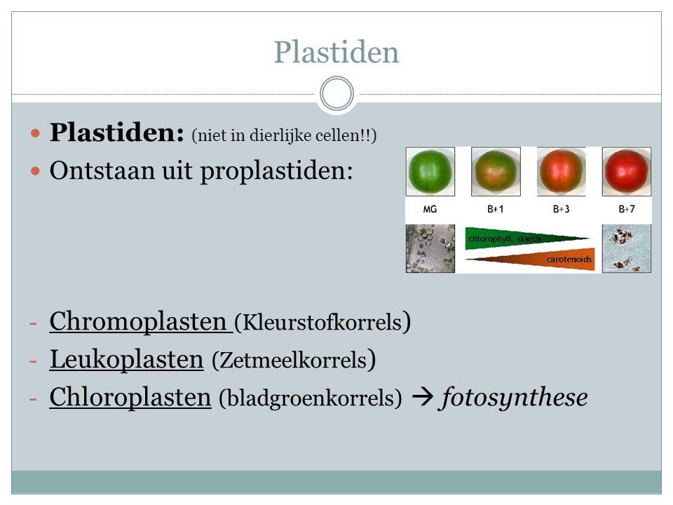Plastiden Plastiden: (niet in dierlijke cellen!!)