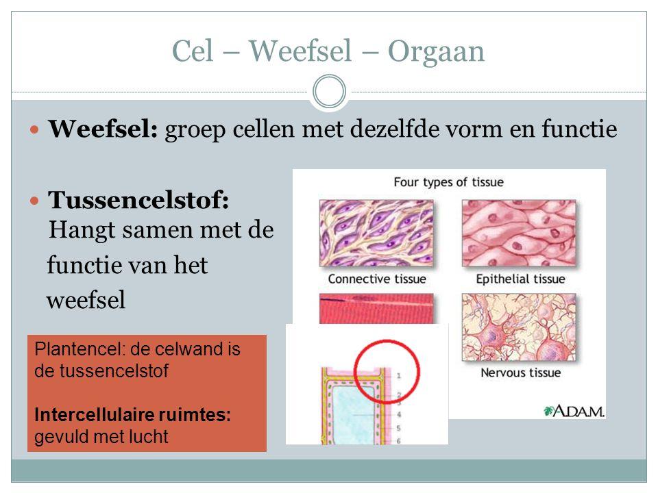 Cel – Weefsel – Orgaan Weefsel: groep cellen met dezelfde vorm en functie. Tussencelstof: Hangt samen met de.