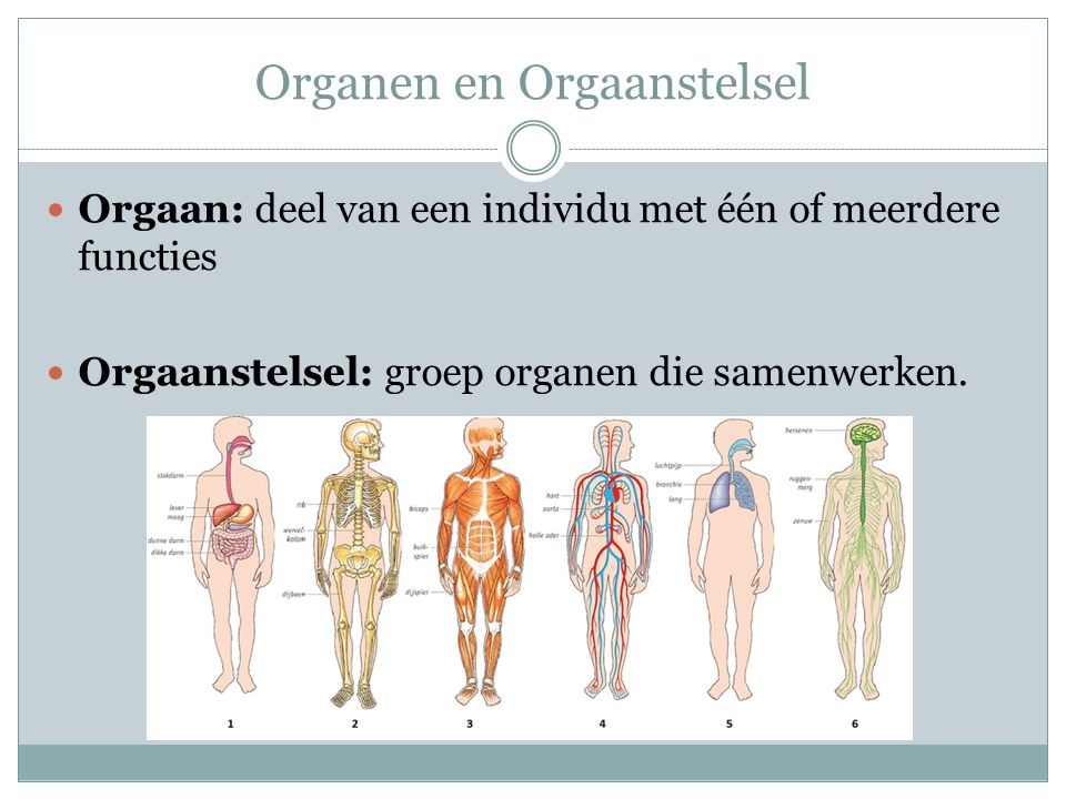 Organen en Orgaanstelsel