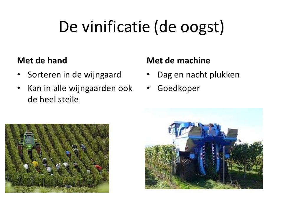 De vinificatie (de oogst)