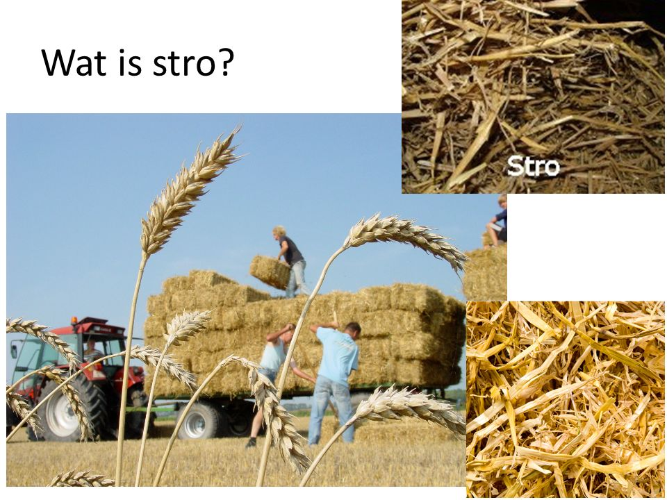 Wat is stro