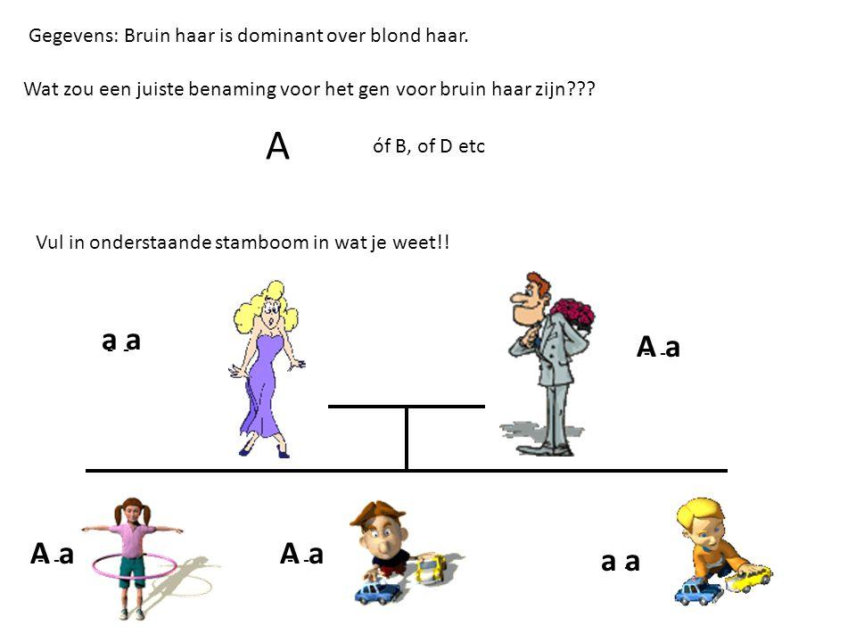 Gegevens: Bruin haar is dominant over blond haar.