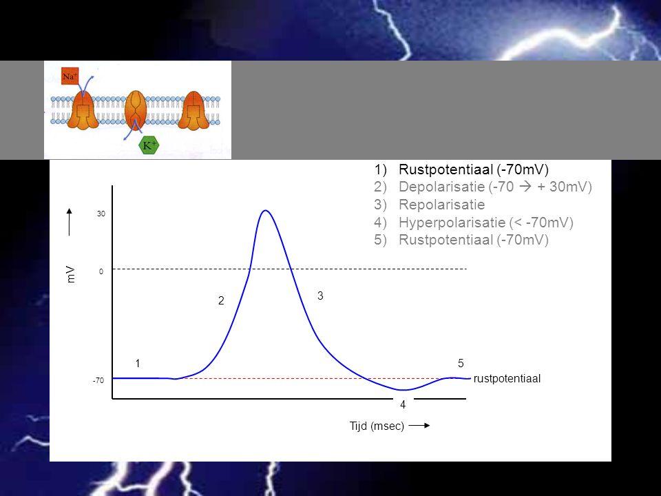 Depolarisatie (-70  + 30mV) Repolarisatie