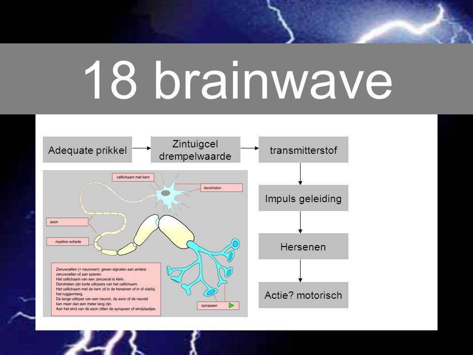 18 brainwave Adequate prikkel Zintuigcel drempelwaarde transmitterstof