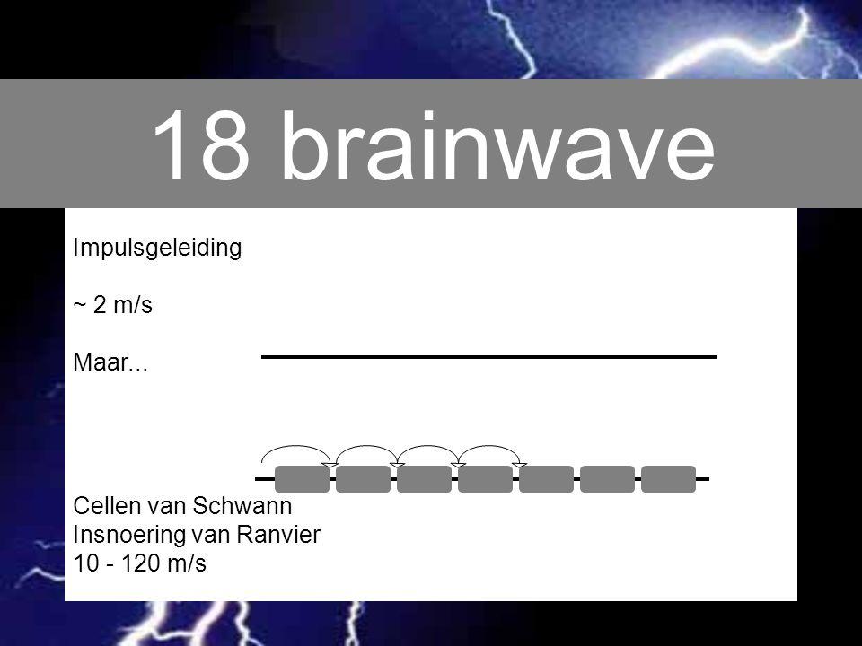 18 brainwave Impulsgeleiding ~ 2 m/s Maar... Cellen van Schwann