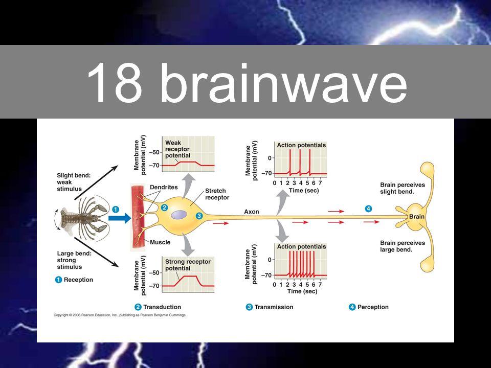 18 brainwave