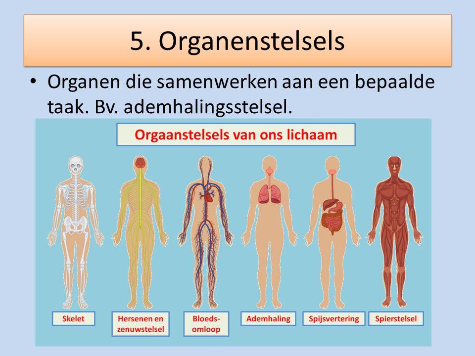 5. Organenstelsels Organen die samenwerken aan een bepaalde taak. Bv. ademhalingsstelsel.
