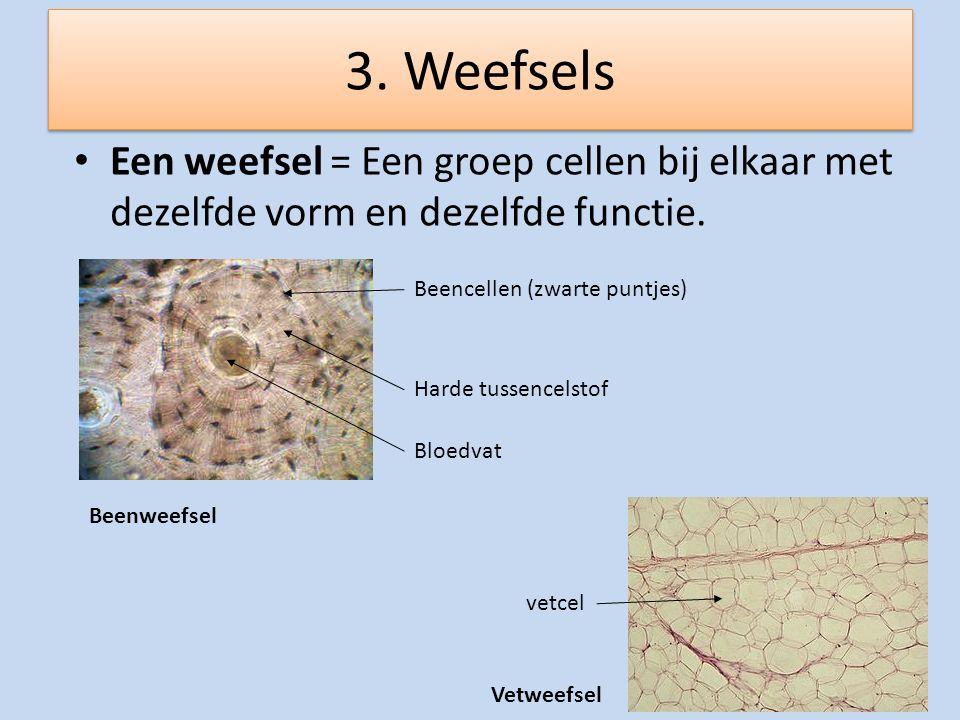 3. Weefsels Een weefsel = Een groep cellen bij elkaar met dezelfde vorm en dezelfde functie. Beencellen (zwarte puntjes)