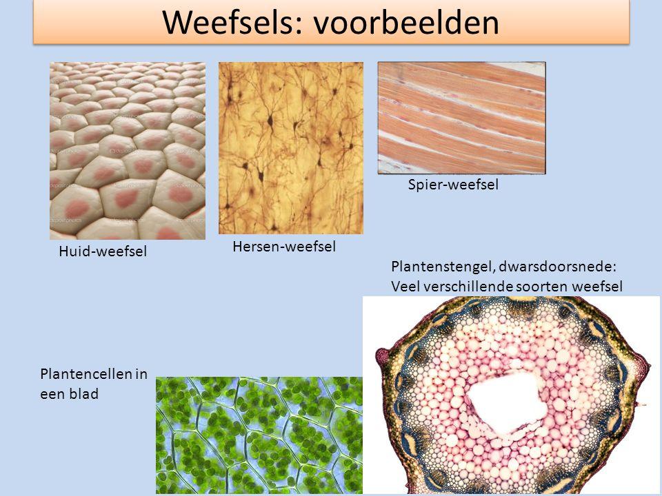 Weefsels: voorbeelden