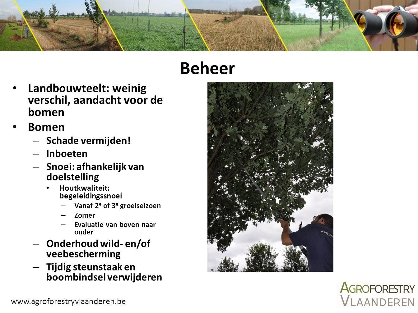 Beheer Landbouwteelt: weinig verschil, aandacht voor de bomen Bomen