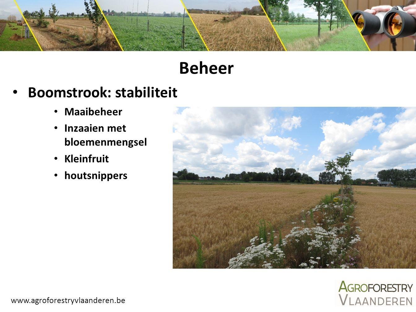Beheer Boomstrook: stabiliteit Maaibeheer Inzaaien met bloemenmengsel