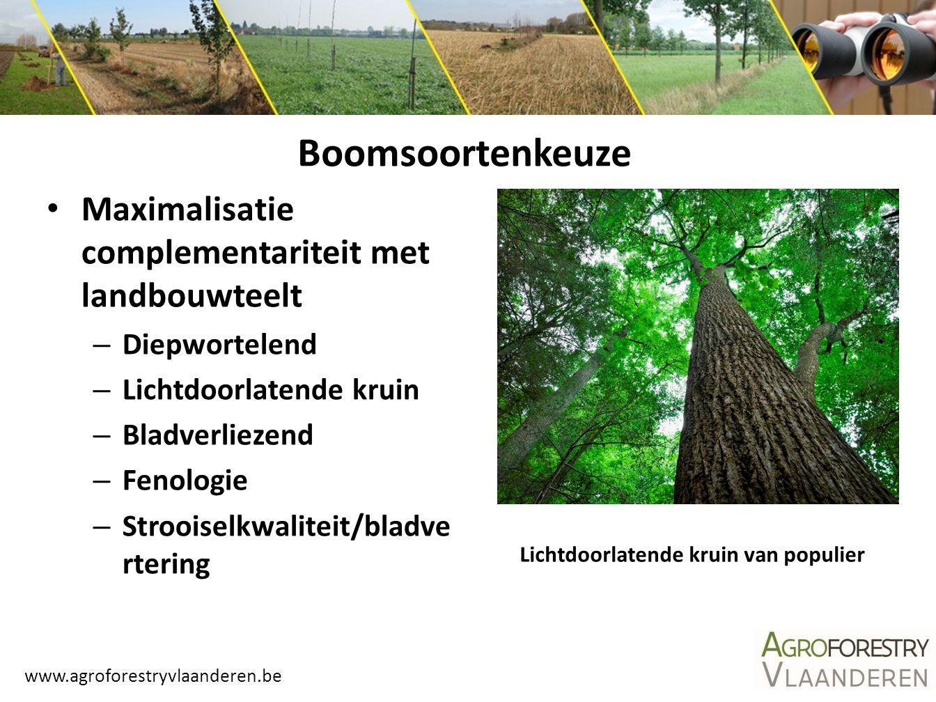 Boomsoortenkeuze Maximalisatie complementariteit met landbouwteelt