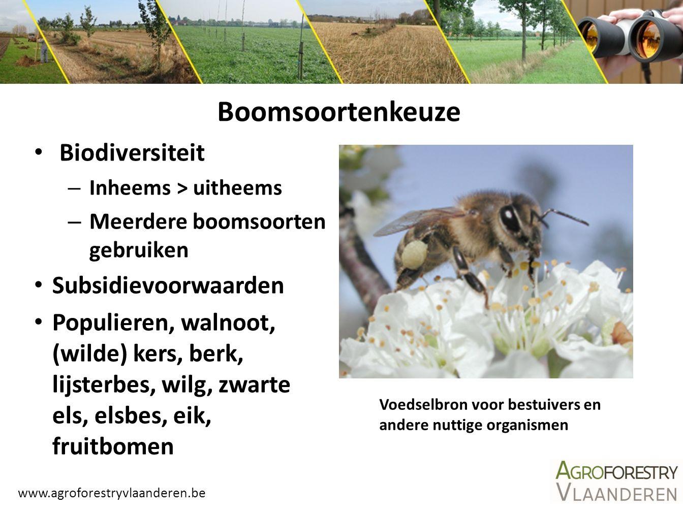 Boomsoortenkeuze Biodiversiteit Subsidievoorwaarden
