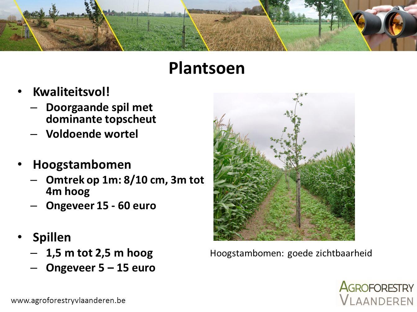 Plantsoen Kwaliteitsvol! Hoogstambomen Spillen