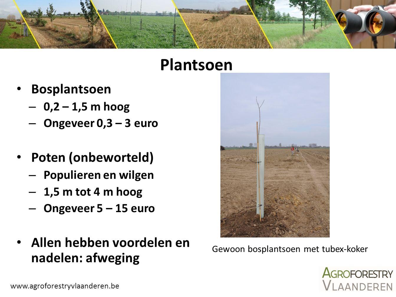 Plantsoen Bosplantsoen Poten (onbeworteld)