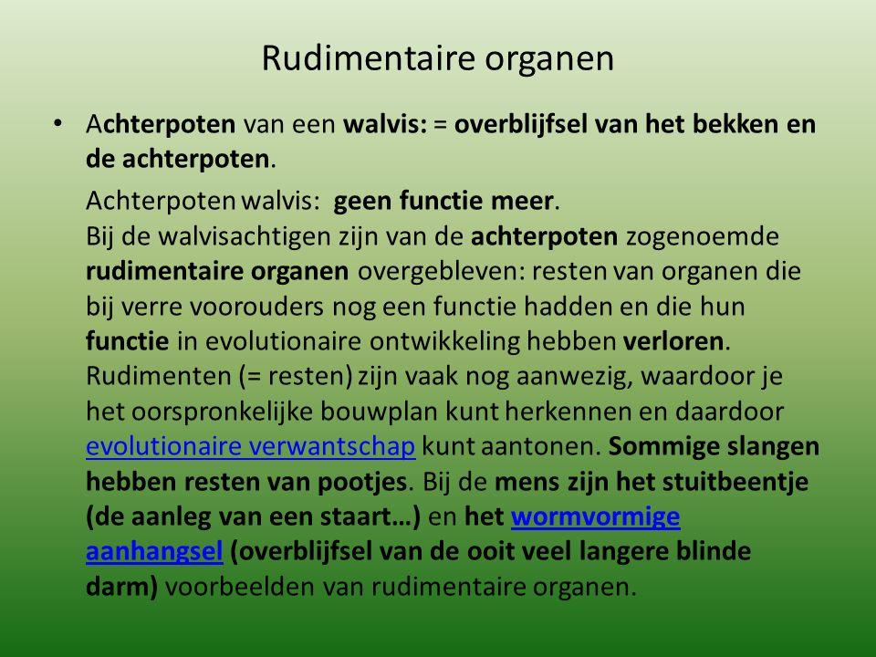 Rudimentaire organen Achterpoten van een walvis: = overblijfsel van het bekken en de achterpoten.