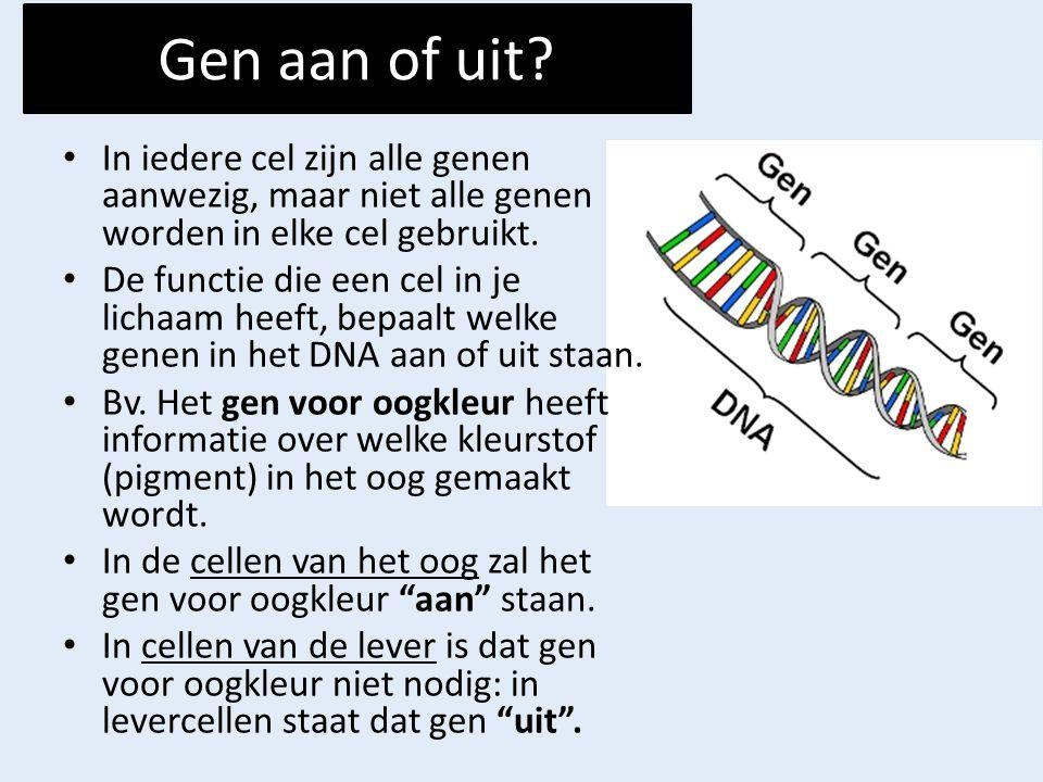 Gen aan of uit In iedere cel zijn alle genen aanwezig, maar niet alle genen worden in elke cel gebruikt.