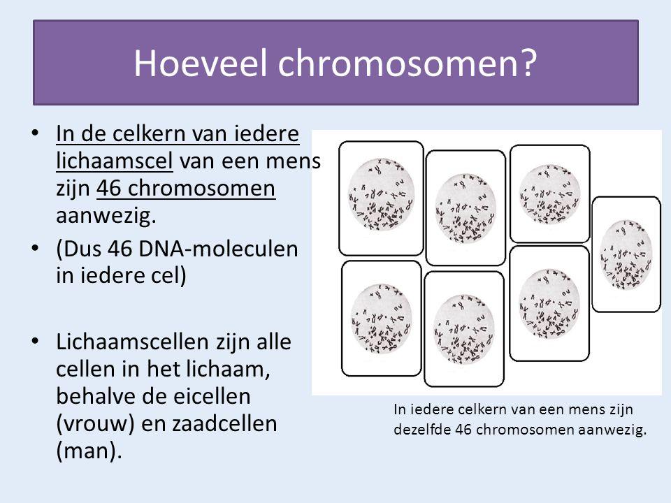 Hoeveel chromosomen In de celkern van iedere lichaamscel van een mens zijn 46 chromosomen aanwezig.