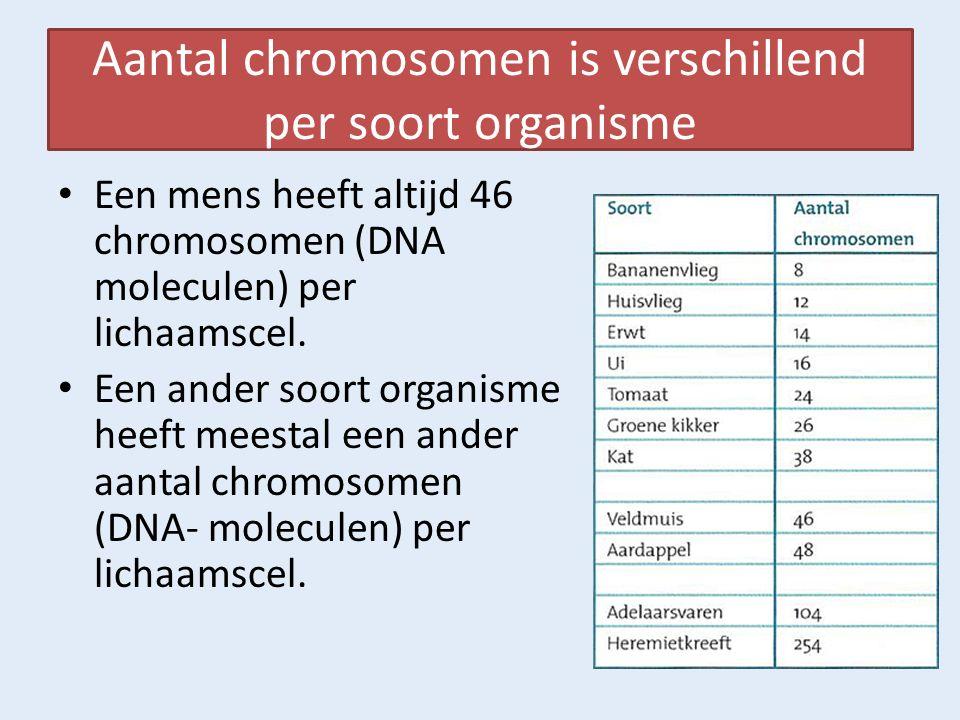 Aantal chromosomen is verschillend per soort organisme