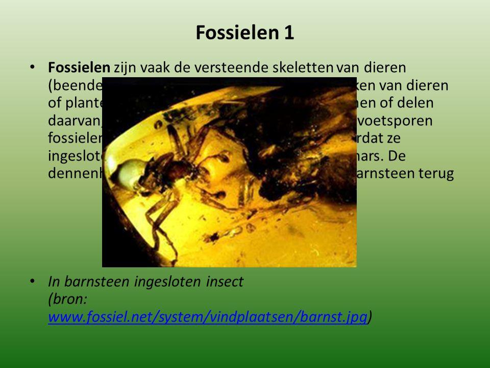 Fossielen 1
