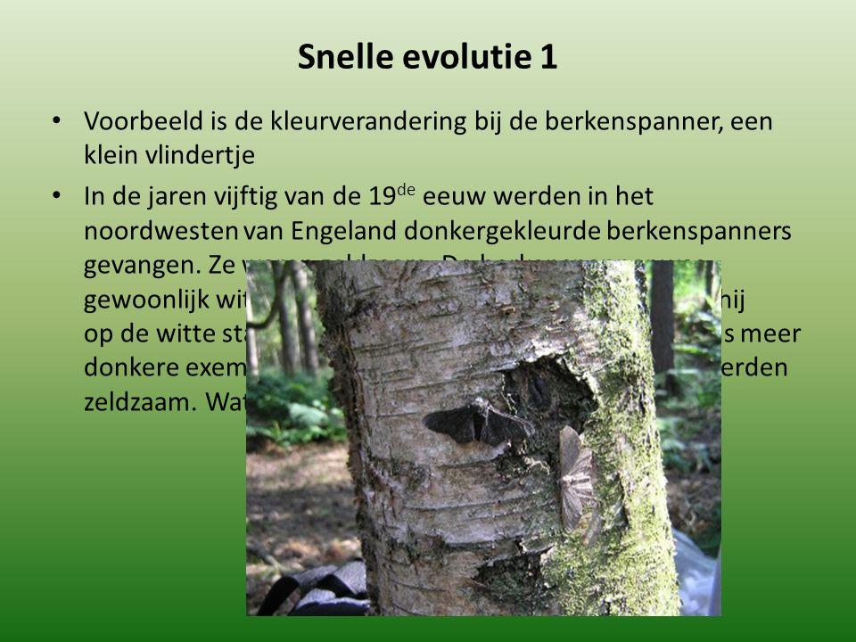 Snelle evolutie 1 Voorbeeld is de kleurverandering bij de berkenspanner, een klein vlindertje.
