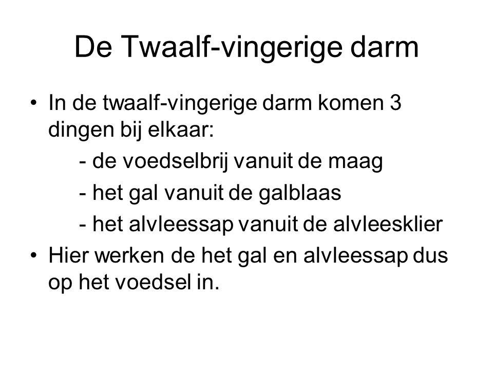 De Twaalf-vingerige darm