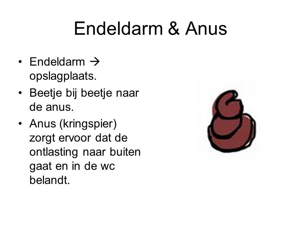 Endeldarm & Anus Endeldarm  opslagplaats.