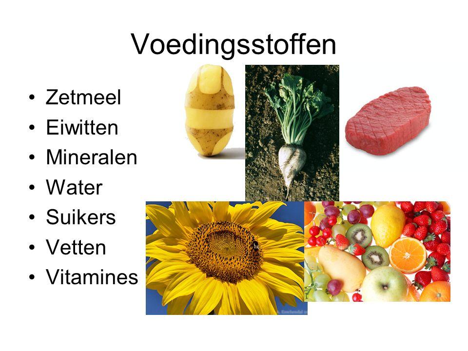 Voedingsstoffen Zetmeel Eiwitten Mineralen Water Suikers Vetten