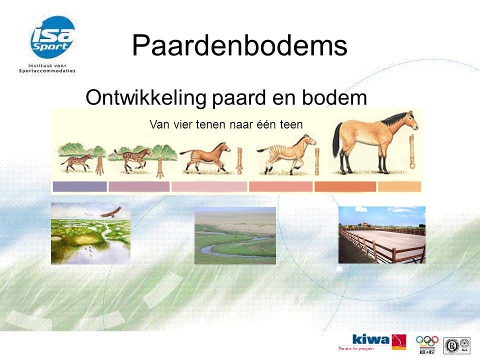 Paardenbodems Ontwikkeling paard en bodem Van vier tenen naar één teen