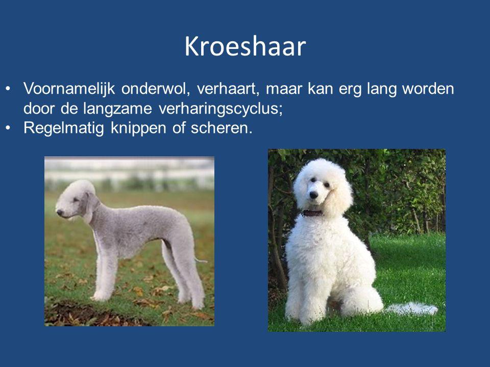 Kroeshaar Voornamelijk onderwol, verhaart, maar kan erg lang worden door de langzame verharingscyclus;