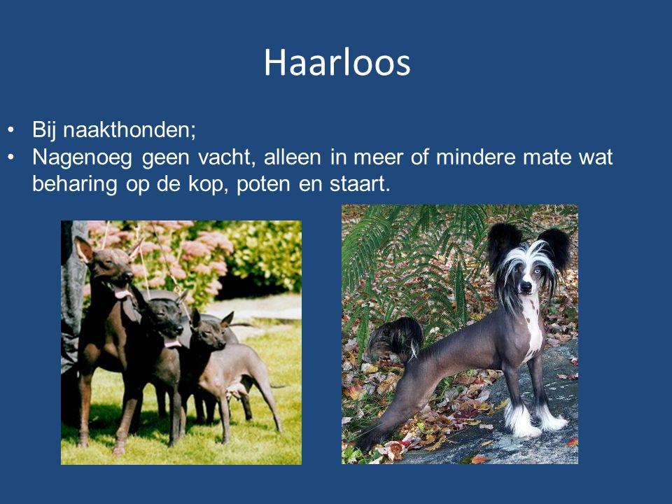 Haarloos Bij naakthonden;