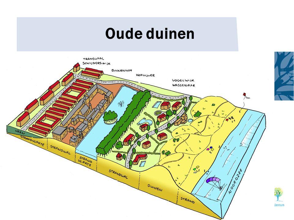 Oude duinen