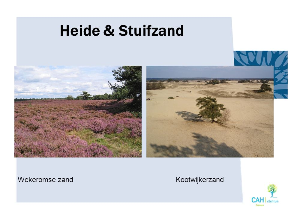 Heide & Stuifzand Wekeromse zand Kootwijkerzand