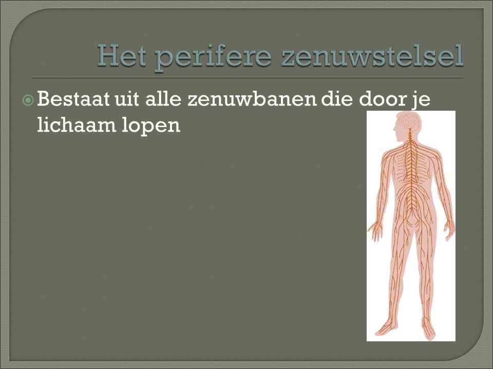 Het perifere zenuwstelsel